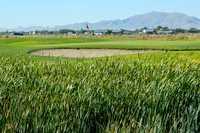 Crane Field GC